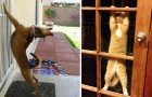 24 immagini esilaranti di animali che vogliono disperatamente entrare in casa