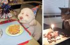 20 animali che hanno avuto una festa di compleanno più bella della tua