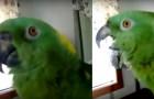 Inizia a filmare il suo pappagallo, ma ascoltate cosa dice poco dopo: rimarrete rapiti!