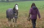 Hon kommer hem efter 3 veckor: titta på hästens otroliga reaktion när han hör henne