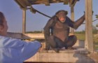 Elle a sauvé ces singes 18 ans en arrière : voilà ce qui se passe quand elle les rencontre à nouveau...