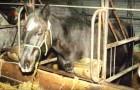 Questi cavalli hanno vissuto chiusi in piccole e buie stalle... Ma ecco come vivono oggi... Wow!