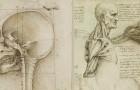 Les études anatomiques de Léonard de Vinci publiées: des dessins incroyables qui ont plus de 500 ans