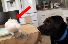 A parrot eats and a dog is watching him --- what comes shortly after is touching!