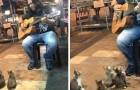 Hij begint een stuk op zijn gitaar te spelen, en trekt daarmee een aantal bijzondere toehoorders. Wow!