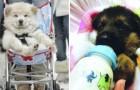 Honden die als kinderen worden behandeld: deze baasjes nemen de verzorging van hun hondjes nog een stapje verder...
