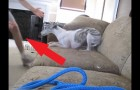 This dog's owners are vacation --- the dog-sitter films what is happening during their absence...