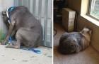 Wenn dein Haustier dieses Verhalten zeigt bring es zum Tierarzt! Es könnte in Gefahr sein!