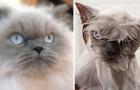 Animali alle prese con il bagno: le foto prima/dopo sono... mostruosamente adorabili