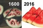 All die Nahrung, die wir zu uns nehmen ist vom Menschen manipuliert: Siehe hier wie und in welchem Ausmaß