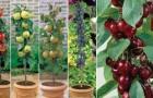 Misschien wist u dit nog niet, maar je kunt ook zelf fruit kweken zonder in het bezit te zijn van een tuin. Dit is de manier!