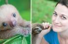 Esiste un orfanotrofio per cuccioli di bradipo... ed è il posto più bello del mondo!
