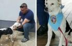 Un cane randagio entra in una stazione di polizia, e pochi giorni dopo... viene assunto!