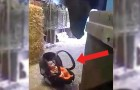 A little baby in a car seat is crying --- Look at the way the horse makes it stop!