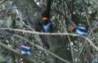3 pajaritos se posicionan sobre una rama: luego de algunos segundos no creeran a vuestros ojos!