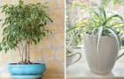 Ecco quali piante devi tenere in casa se vuoi migliorare la qualità dell'aria che respiri