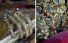 Les images fascinantes de la sépulture des martyrs médiévaux entre l'or et les pierres précieuses