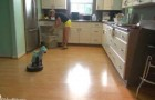 The cat-shark cleans the kitchen