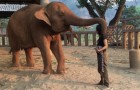 Singing a woman approaches an elephant --- See how the animal reacts. . . Wow!