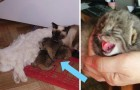 Un fermier trouve quatre chatons orphelins, mais il se rend vite compte qu'ils ne sont pas comme les autres