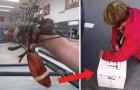 Ze koopt een levende kreeft op de vismarkt... maar haar volgende zet had je misschien niet verwacht