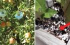8 alternatieve en milieuvriendelijke methoden om insecten en vogels te weren uit je tuin...