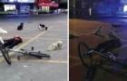 8 honden hebben de hele nacht liggen waken bij het lichaam van de vrouw die hen voedde...