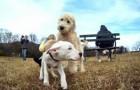 GoPro: Mit den Augen eines Hundes