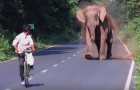 An elephant blocks traffic --- But shortly you will understand why!