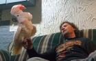 Il demande à son perroquet s'il l'aime: sa réaction est hilarante
