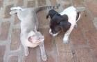 Ein Hund und und eine frischgebackene Katzenmama: Was sie machen, ist gegen jedes Naturgesetz