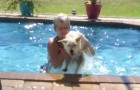 A woman tries to get her dog out of the pool ... But it is not easy!