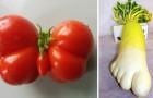 Vegetali dalla forma inusuale: non potrete evitare di osservarli con curiosità... e inquietudine!