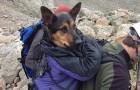 Son propriétaire l'a laissée en montagne, mais après huit jours d'agonie quelqu'un s'en rend compte