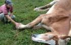 Una donna adotta due cavalli vecchi e stremati e riesce a ottenere una magnifica trasformazione