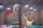 Es scheint als ob das Kätzchen aus ihrer Box fliehen will...aber der nächste Zug ist völlig unerwartet