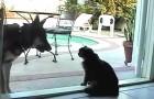 Nessuno si aspettava che un cane avesse cosi tanta paura del gatto...Non crederete ai vostri occhi!