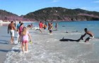 30 delfini restano arenati su una spiaggia in Brasile: ciò che fa la gente vi farà emozionare!
