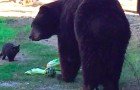 Strange friends ... a huge black bear and a kitten!