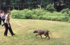 Un chien revoit sa « maman » après 1 an : ne manquez pas leur rencontre émouvante
