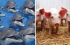 Welche sind die 15 intelligentesten Tiere der Welt? Diese Liste beinhaltet Überraschungen