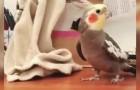 Deze papegaai wil de wereld laten zien wat hij heeft geleerd: luister goed!