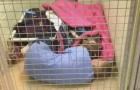 Um cão abandonado está aterrorizado: a voluntária faz um gesto especial