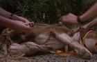 Le pitbull ne bougeait pas: quand ils s'approchent, ils découvrent quelque chose d'affreux