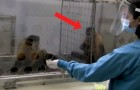 Monkeys are unfairly rewarded --- their reaction amazes observers!