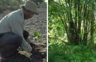 Da isola deserta a foresta: quest'uomo ha piantato da solo 800 ettari di alberi in 30 anni