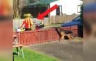 Filmando secretamente a chegada do carteiro,para acompanhar a reação do seu cão... adorável!