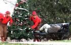 E' Natale anche per loro