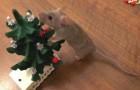 Un piccolo roditore prepara il suo albero di natale