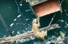 Ein Leopard faellt in eine Zisterne: die Buerger retten ihm das Leben